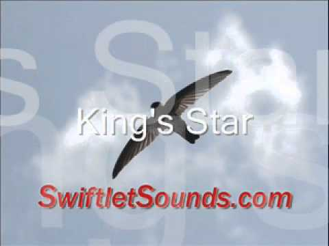 Swiftlet Sounds - King's Star External Sound video