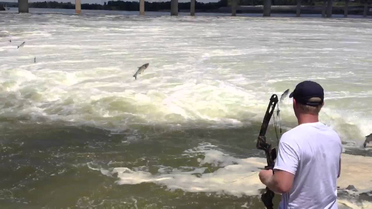 Bow fishing for asian carp below kentucky dam youtube for Kentucky out of state fishing license
