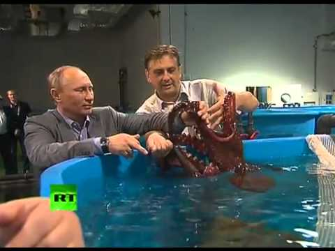 АТЭС - к Путину не присосался осьминог в океанариуме !!! not Putin sucked octopus in the aquarium