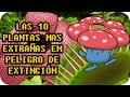 LAS 10 PLANTAS MÁS RARAS EN PELIGRO DE EXTINCIÓN (Y sus equivalentes Pokemon) - TOP