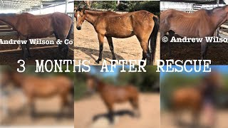 THREE MONTHS AFTER SAVING 3 HORSES FROM SLAUGHTER