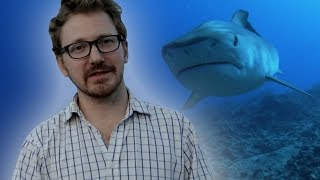 Do Sharks Attack Humans? - Q&A - Earth Unplugged