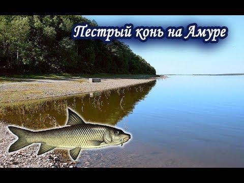 ловля рыбы для заработка