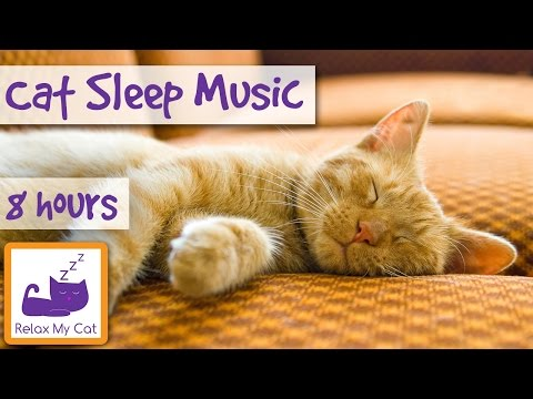 Over 8 Hours of Relaxing  For Cats Long Playlist For Cats Natural Anxiety and Stress Relief