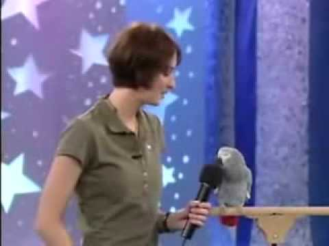 * Einstein the famous talking African Grey Parrot! * Video