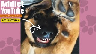 funny dogs 🐶 and cats 😽 compilation videos - none stop laughing and smiling - รวมคลิปฮาๆ หมาแมว💓