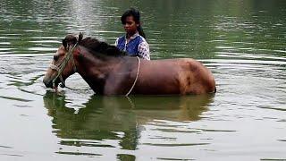 ঘোর সোয়ারী তাসমিনার জীবন। Horse girl Tasmina Lifestyle