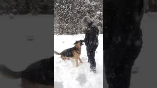 GERMAN SHEPHERDS are the FUNNIEST DOGS - Funny DOG
