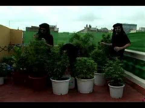 Marihuana: horticultura del cannabis - Jorge Cervantes
