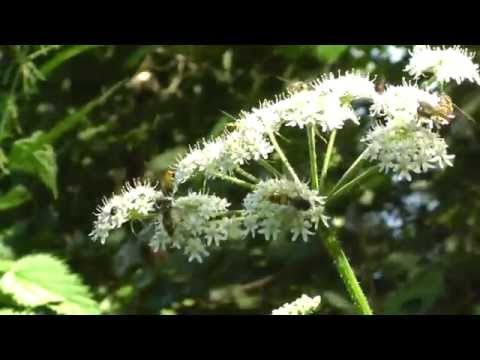 Beautiful Nature Scene with Wild Bees - Birdssong - Inspirational Einstein Quotes