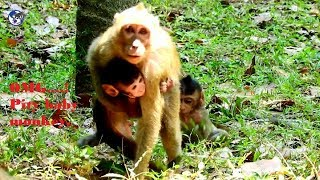 Bad habit kidnapper Duchess steal baby monkey climb to the tree.Pity baby monkey.