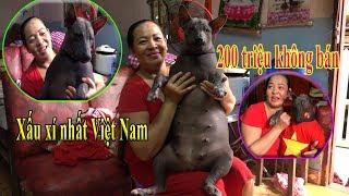 Bất ngờ khi Gặp chú chó không lông xấu xí nhất việt nam, trả 200 triệu không bán
