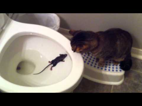 Rascal the Cat and the Toilet Rat