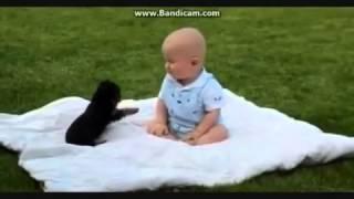 Top 10 Lustige Tiere Videos
