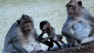 Let's Me Go Mum Baby Monkey ST843 Mono Monkey