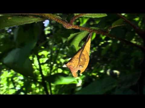 蟲相逢宣導短片(5分鐘版)