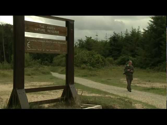 Butterflies - RTE News