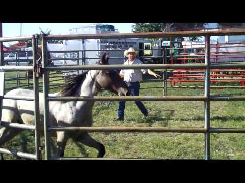 Wild Horse Training Demonstration