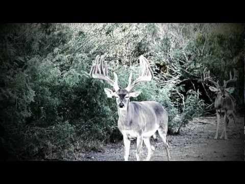 Smack Dab In The Middle Of Nowhere | Deer & Wildlife Stories
