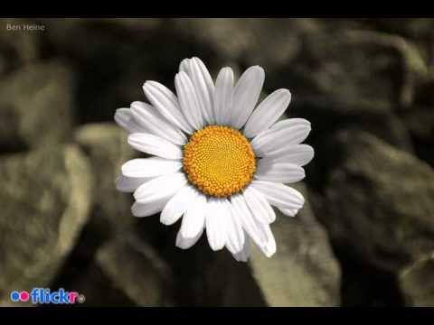 ilmoe.com 022. Ustadz Hanan  Sesatnya Quraniyun 4b.mp3