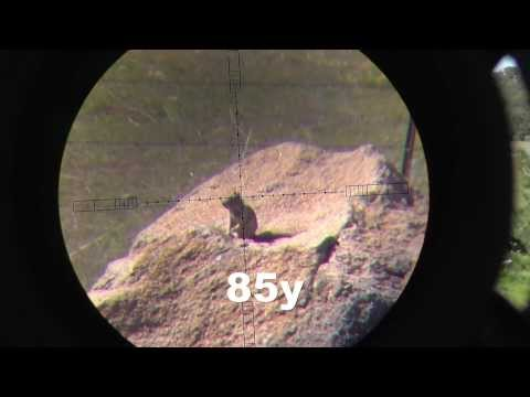 .25 Cal Hatsan BT65 Vs Ground Squirrels (HUNTING)