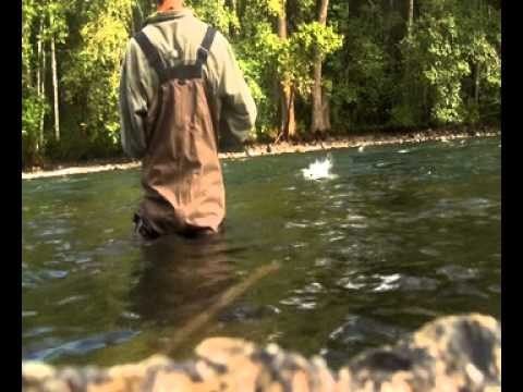 Pink salmon fishing on the Quinsam river (vancouver island: Campbel river)