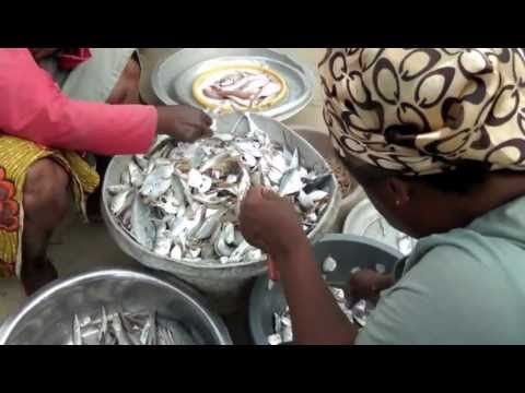 Fishing for Resilience in Accra | WINNER entry for DPU short film competition 2012