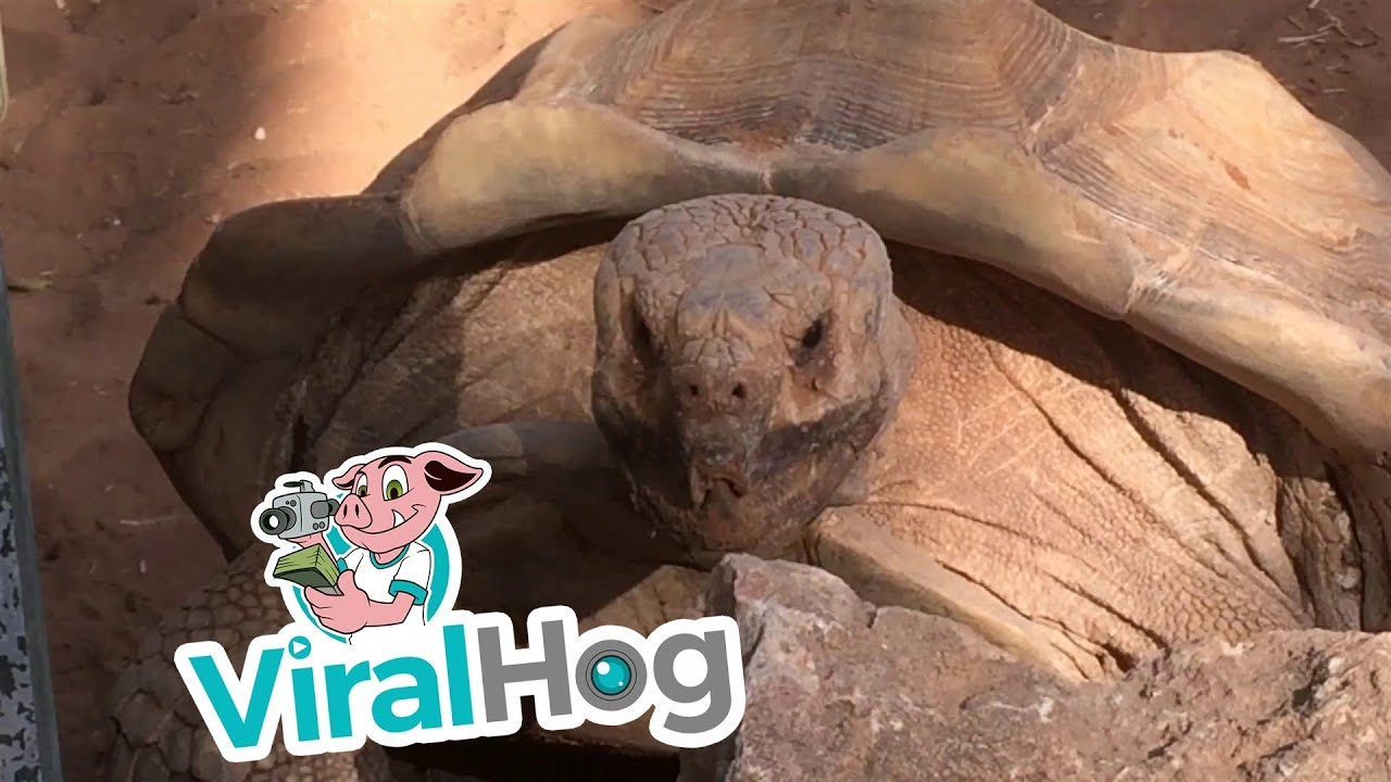 "[""Wow!"" Tortoise Can't Hide Excitement While Having Sex, Keeps Repeating One Word] Video"
