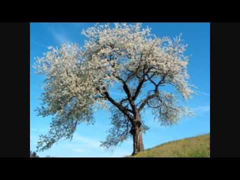 Norooz, Nowruz, Iranian New Year, Persian New Year, sh8oon