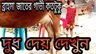 The milk of Brahma variety cow.  Animals Health Care