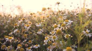 Relaxing Piano Music: Sleep Music, Beautiful Nature, Deep Sleeping Music, Fall Asleep Fast ★125
