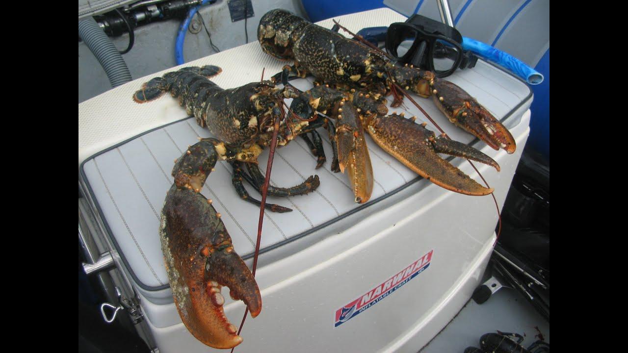 Comment chasser le homard - Comment chasser les moucherons ...