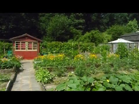 Mein Garten ende Juni.
