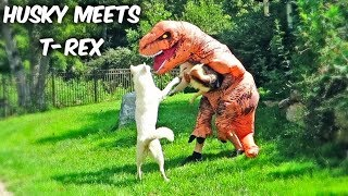 Funny Dogs Meet T-Rex!
