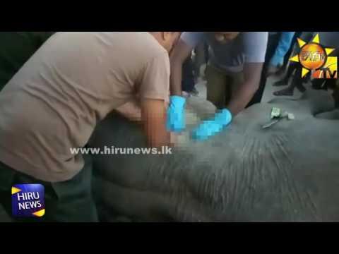 thilak elephant|eng