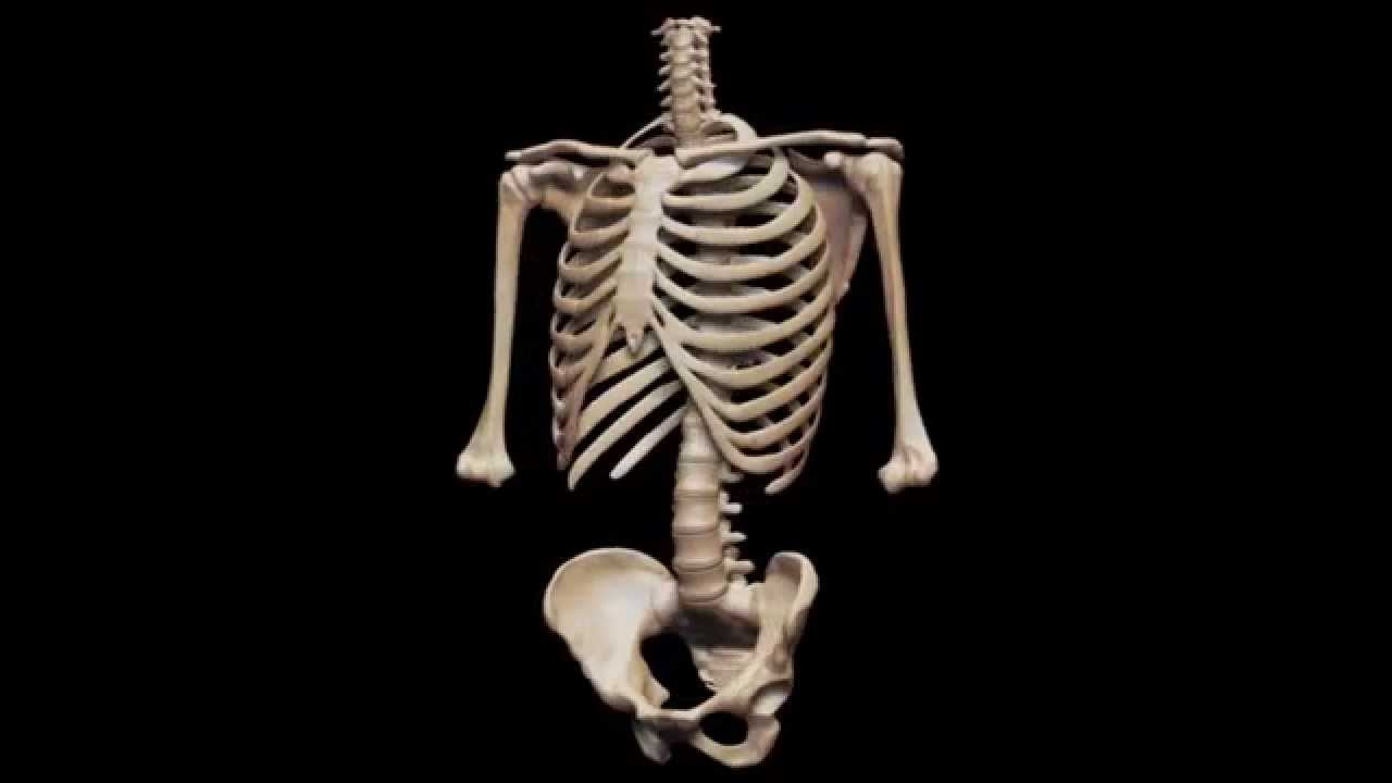 Displaying 19 gt images for a real human skeleton