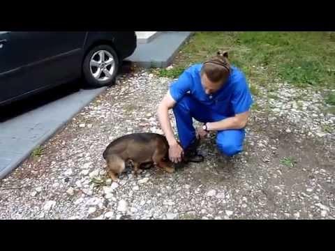 Sympatyczny pies przywiązany do drzewa szuka kochającego domu. Centrum Weterynaryjne LASKI