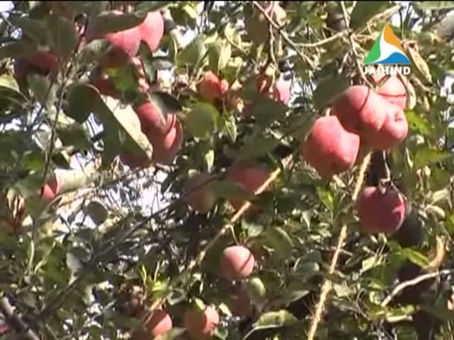 Jammu Kashmir Apple Farm