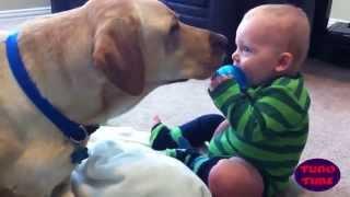 Bebês que amam cachorros