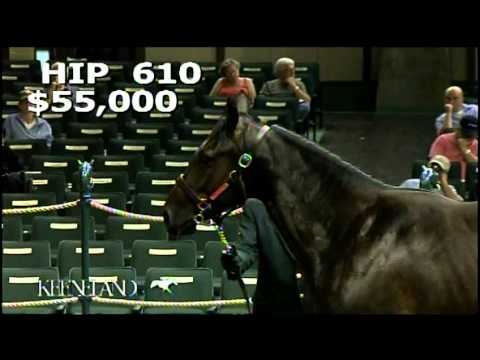 2012 September Yearling Sale - No Nay Never Hip 610