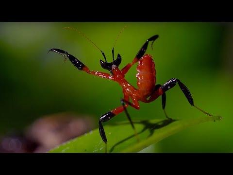 Kung Fu Mantis Vs Jumping Spider - Life Story - BBC