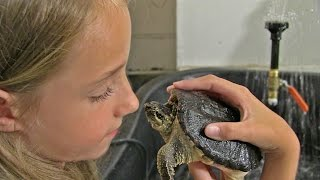 GIRL SWIMS WITH [Super-Tame] PET SNAPPING TURTLE : New Update