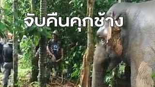 จับแล้วช้างป่าสีดอแก้ว หลังเกเรแหกคุกช้าง บุกสวนผลไม้ชาวจันทบุรี