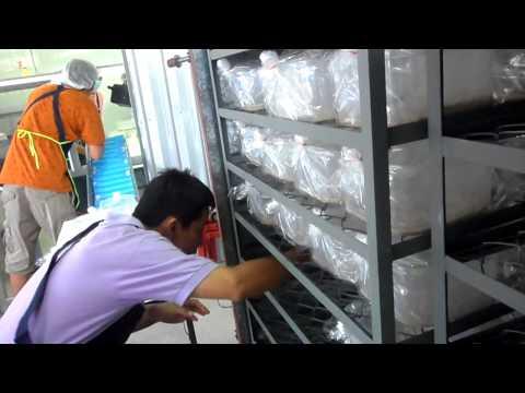 RSTDC, Thailand : Substrate preparation for Cordyceps militaris at Mushroom Gold Farm, Chiangrai