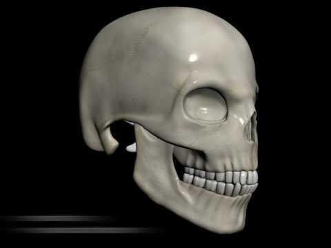The Skull thumbnail