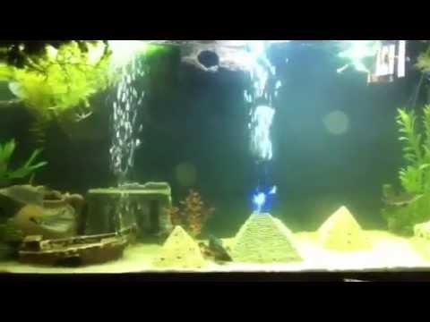 My 55 Gallon EGYPTIAN THEMED Aquarium - Pyramids of Giza - YouTube