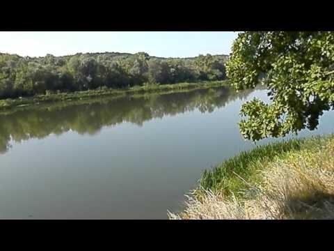 видео сазан река дон