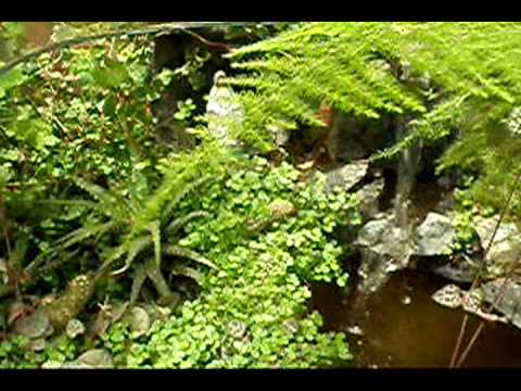 Jardines en miniatura santuario youtube for Jardines en miniatura