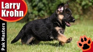 What I teach my puppies first / puppy training