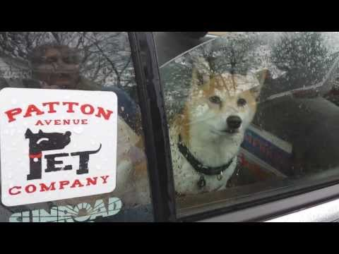 We love patton Avenue pet company in ASHEVILLE NC  28806